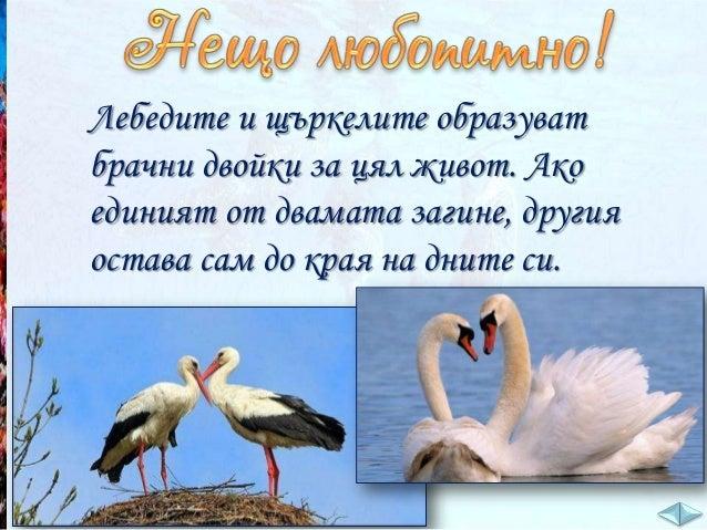 Избройте приспособления на птиците за летене във въздуха. _____________________________________  криле, покрити с пера; _...
