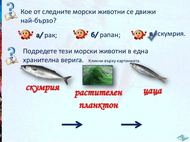 Речник: планктон – съставен е от много малки, свободно плаващи морски растения и животни /дребни водорасли, червейчета, ма...