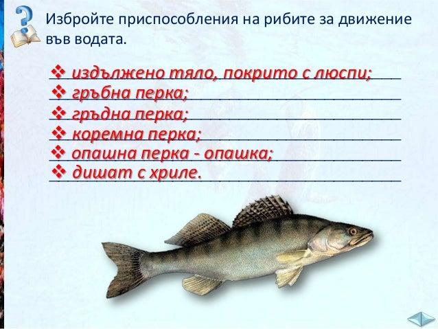 Животните във водата - ЧП,-3-клас,-Булвест
