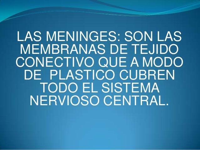 LAS MENINGES: SON LAS MEMBRANAS DE TEJIDO CONECTIVO QUE A MODO DE PLASTICO CUBREN TODO EL SISTEMA NERVIOSO CENTRAL.