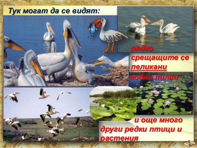 Лековитата вода в Хисаря, Кюстендил, Сандански е известна далеч зад пределите на България.  Хисаря