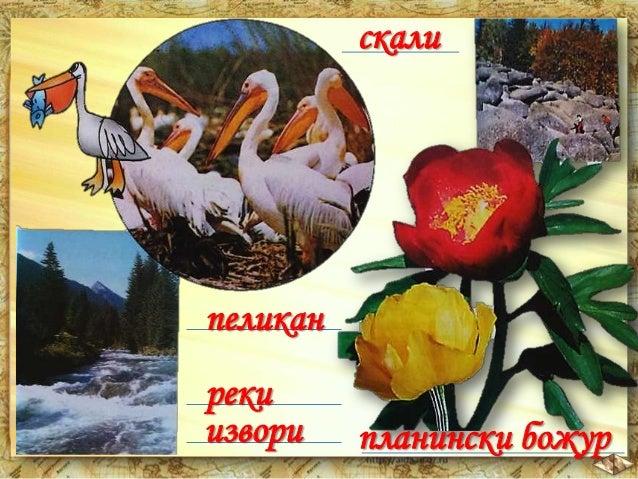 1. Уникалната природа на България 2. Скални природни забележителности 3. Пещери 4. Езера 5. Лечебни извори 6. Стари дървет...