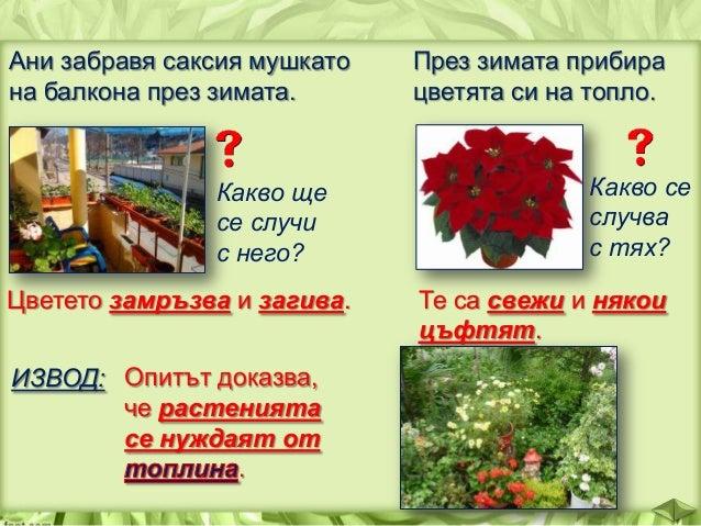 Какво би станало, ако покрием за няколко дни растение със стъклен буркан? Оставено без въздух, растението загива. ИЗВОД: Р...