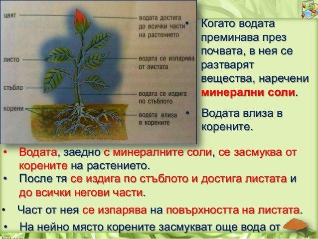 Допълни изреченията. 1.За да изготвят сами храната си, растенията се нуждаят от ____________________________________ 2.Рас...