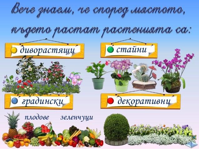 Ще продължим да изучаваме разнообразния растителен свят.