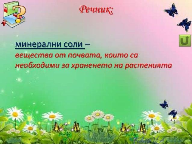 Животът на растенията - ЧП,-3-клас,-Булвест