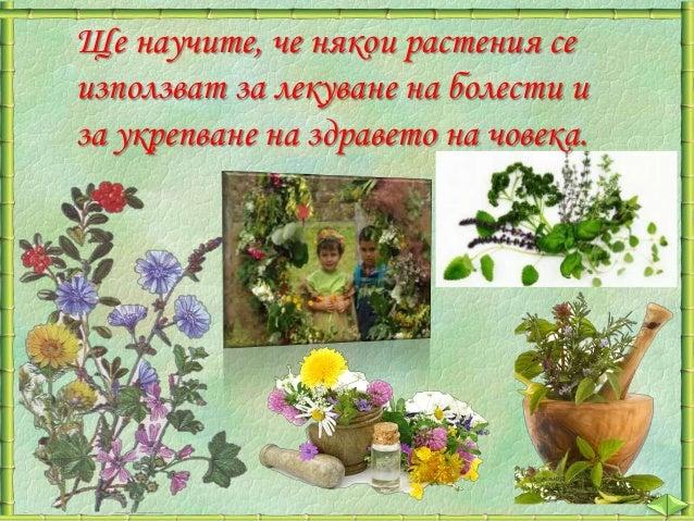 Растителният свят в нашата страна е много богат и разнообразен.