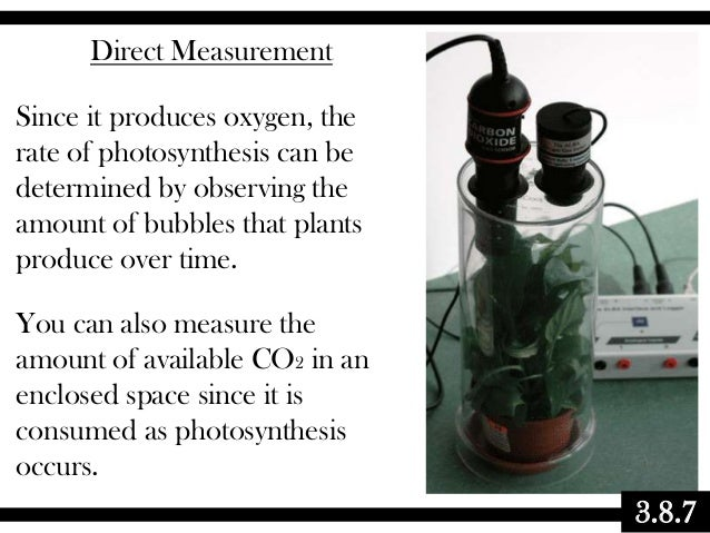 Direct Measurement Since it produces oxygen, the rate of photosynthesis can be determined by observing the amount of bubbl...