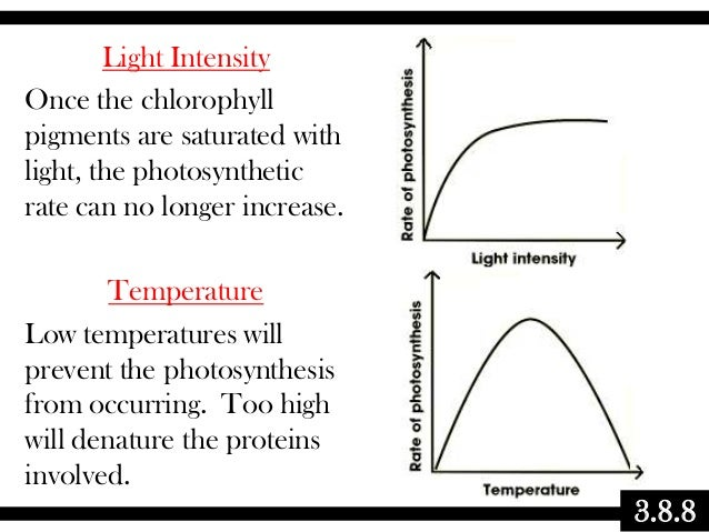 Light Intensity Once the chlorophyll pigments are saturated with light, the photosynthetic rate can no longer increase. Te...