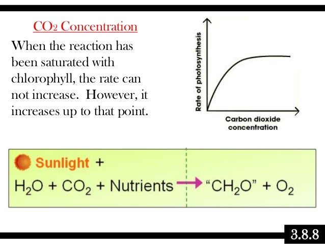 CO2 Concentration When the reaction has been saturated with chlorophyll, the rate can not increase. However, it increases ...
