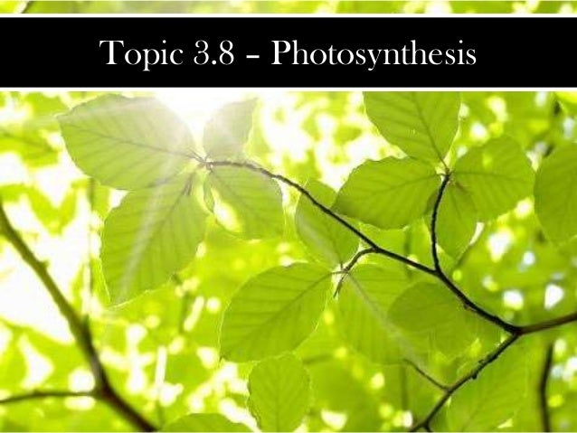 Topic 3.8 – Photosynthesis