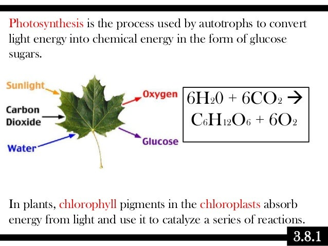 3.8.1 Photosynthesis is the process used by autotrophs to convert light energy into chemical energy in the form of glucose...