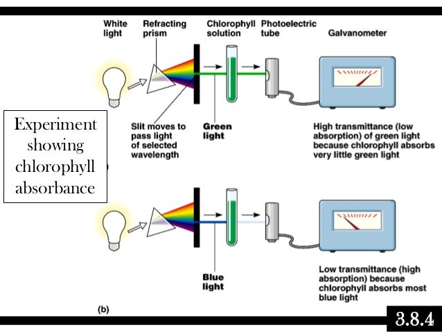 biochemistry of photosynthesis Multiple choice questions about the mechanism of the light-dependent reactions of photosynthesis is subject line snape biochemistry.