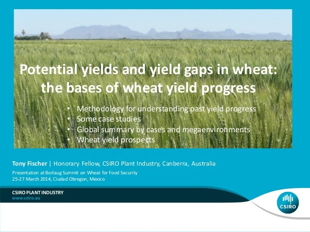 Potential yields and yield gaps in wheat: the bases of wheat yield progress CSIRO PLANT INDUSTRY Tony Fischer | Honorary F...