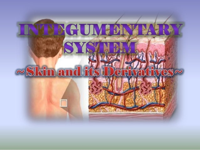 Skin (cutaneous membrane) •largest organ of the human body with a surface area of 1.5-2.0 square meters in an average adul...