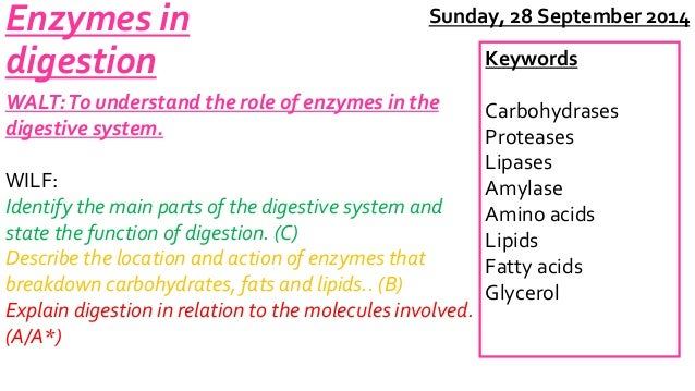Enzymes in  digestion  WALT: To understand the role of enzymes in the  digestive system.  Sunday, 28 September 2014  WILF:...