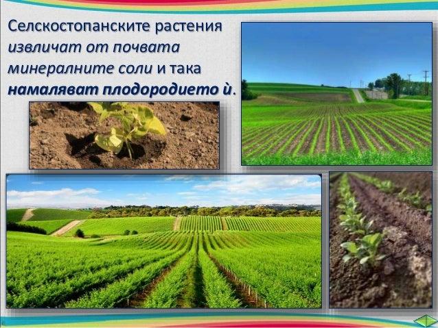 Торовете съдържат необходимите за  растенията минерални соли.  Използват се два  вида торове:  естествени изкуствени  Есте...