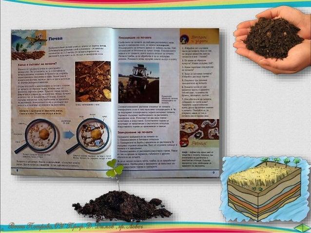 Дебелината на почвения  слой е различна – от няколко  сантиметра до 2 – 3 метра.  От почвата корените на  растенията получ...