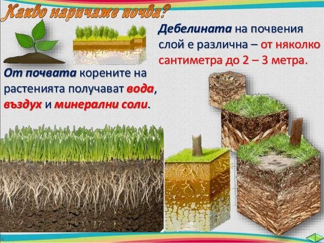 Твърди почвени частици  /бучки/ с различна големина.  клечки, части от листа и  други остатъци от мъртви  растения и живот...