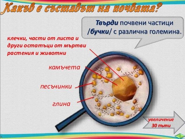 пясък глина  въздух вода  камъчета  хумус  минерални  соли  Хумусът определя  __п_ло_д_о_р_о_д_и_е_т__о__ на почвата.