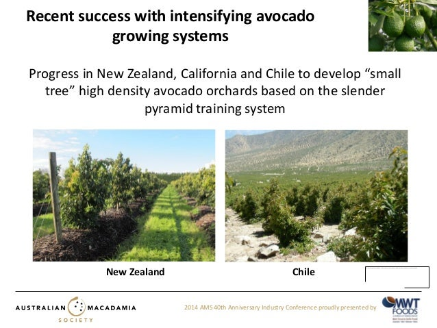 Grant Thorp - Orchard and canopy management (integrated orchard manag…