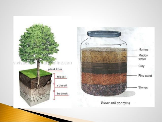 for What soil contains