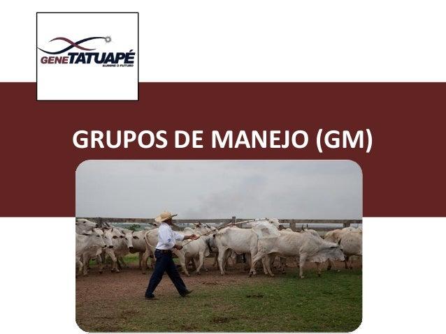 GRUPOSDEMANEJO(GM)