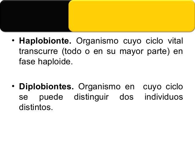Clases de Diplomastigomycotina • Oomycetes • Zoosporas biflageladas con un flagelo barbulado dirigido hacia delante y otro...