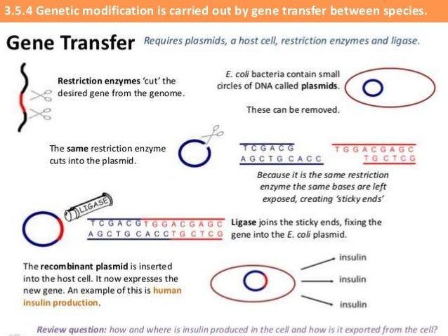 IB Biology 35 Slides Genetic Modification Biotechnology – Genetic Engineering Worksheet