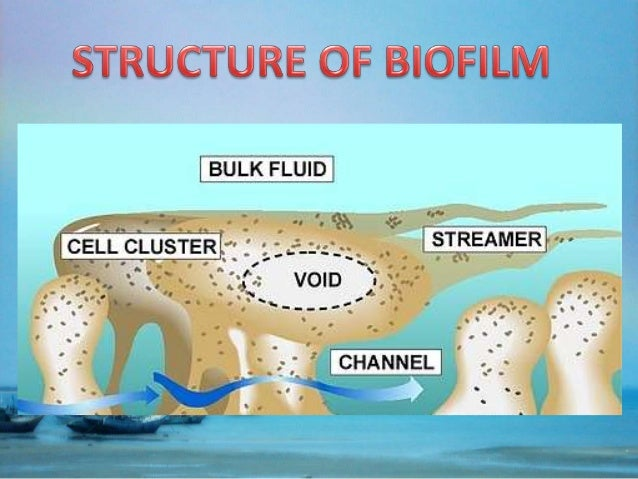 properties of dental plaque biofilm Biofilm-associated cells can be differentiated  observations of dental plaque and sessile communities in  and variou s properties of the cell surface.