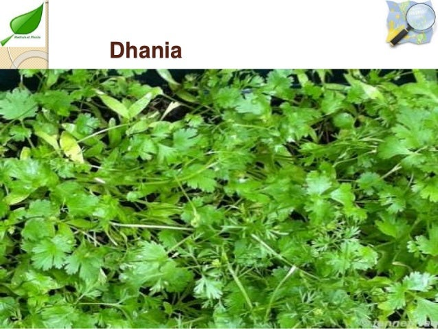 3 Medicinal Plants Cultivation By Allah Dad Khan