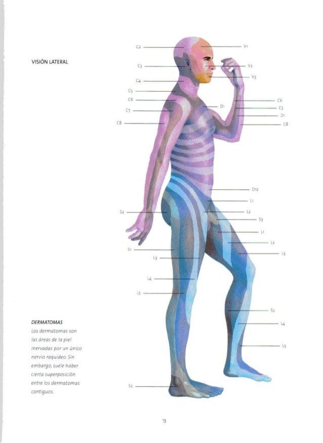 Excelente Cabeza Dermatomas Molde - Imágenes de Anatomía Humana ...