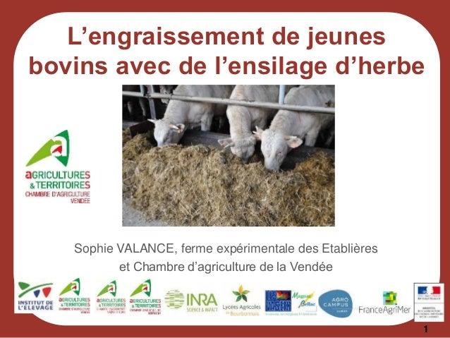 1 Sophie VALANCE, ferme expérimentale des Etablières et Chambre d'agriculture de la Vendée L'engraissement de jeunes bovin...