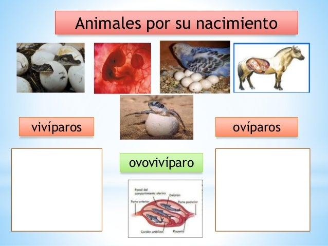 3 Clasificación De Los Animales