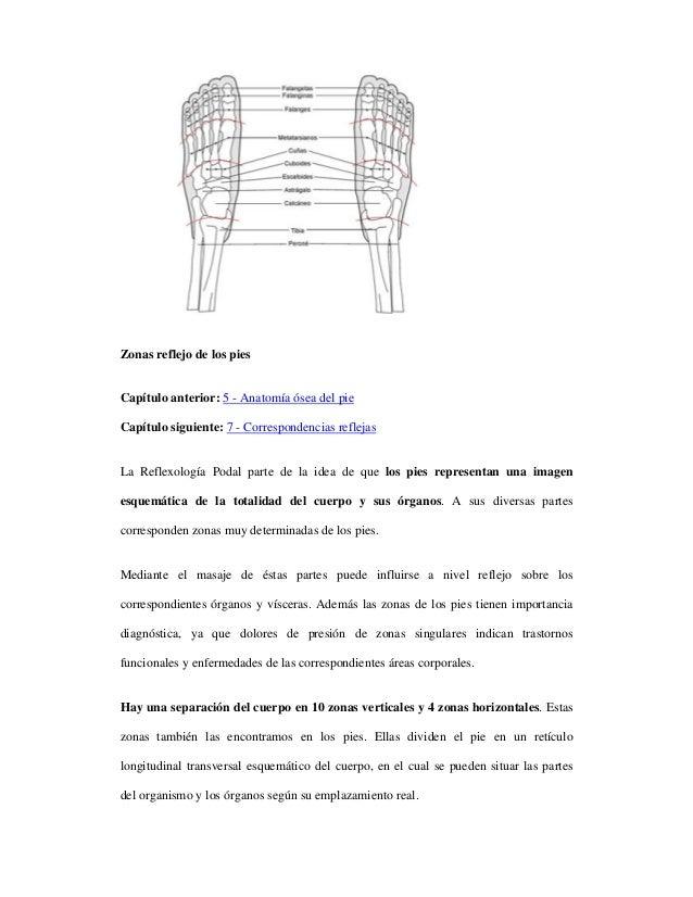 3. anatomía y zonas del pie