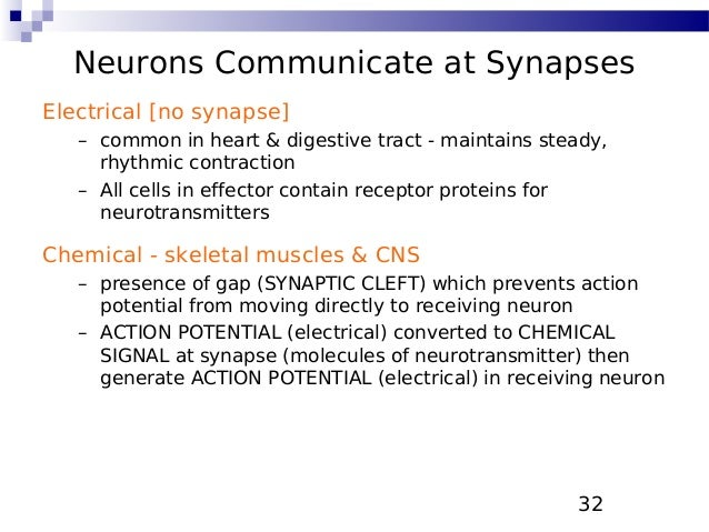 Electrical Vs Chemical Signals