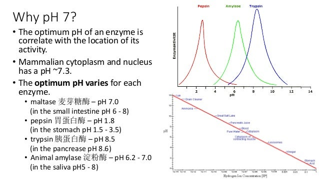 what is the optimum ph for amylase