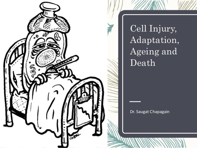 Cell Injury, Adaptation, Ageing and Death Dr. Saugat Chapagain