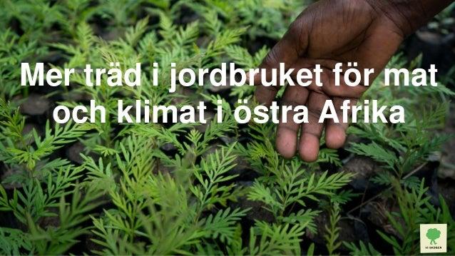Mer träd i jordbruket för mat och klimat i östra Afrika