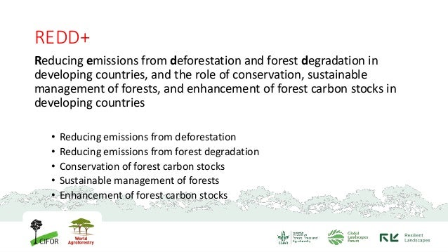 REDD+ and its implementation in Indonesia Slide 2