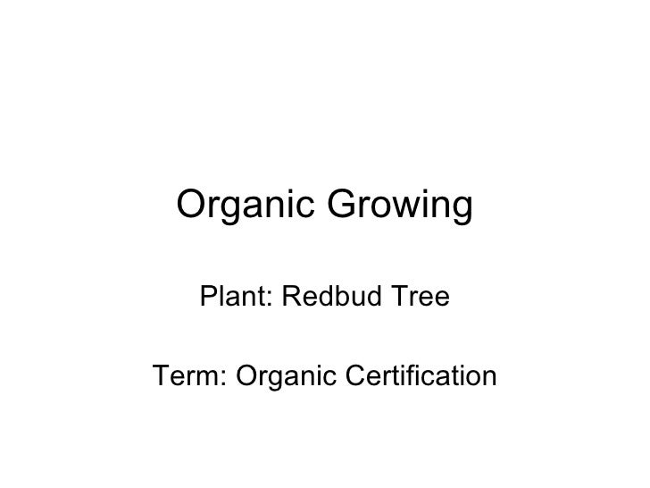 Organic Growing Plant: Redbud Tree Term: Organic Certification