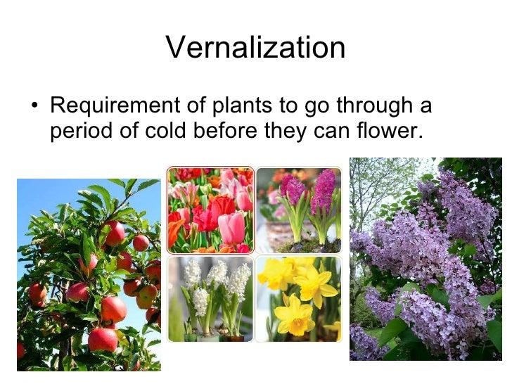 3 24 Vernalization