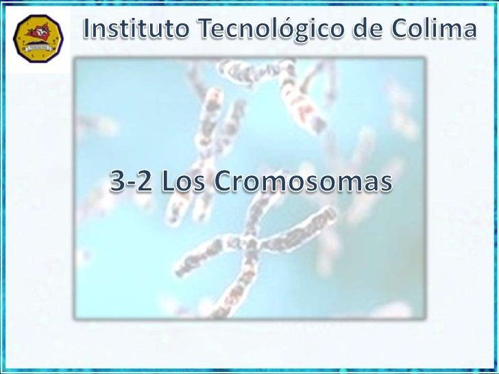 Instituto Tecnológico de Colima<br />3-2 Los Cromosomas<br />