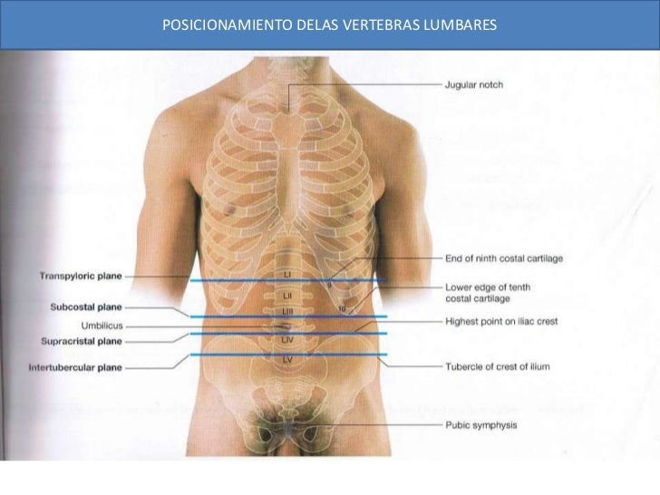 3.6 anatomia superfical del abdomen
