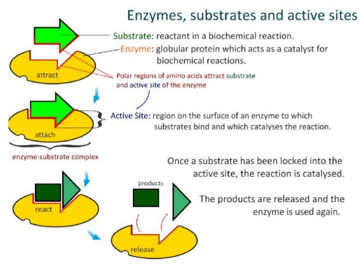 3.6 Enzymes