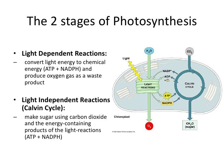 What is the difference between photosynthesis and respiration?