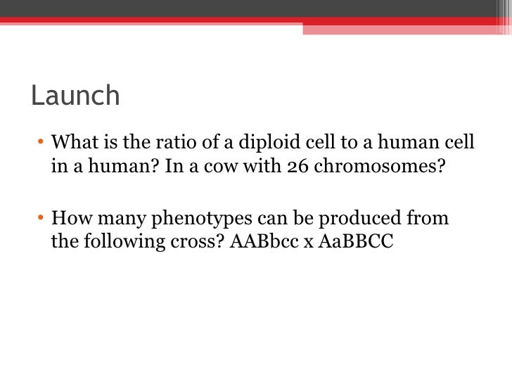 Launch <ul><li>What is the ratio of a diploid cell to a human cell in a human? In a cow with 26 chromosomes? </li></ul><ul...