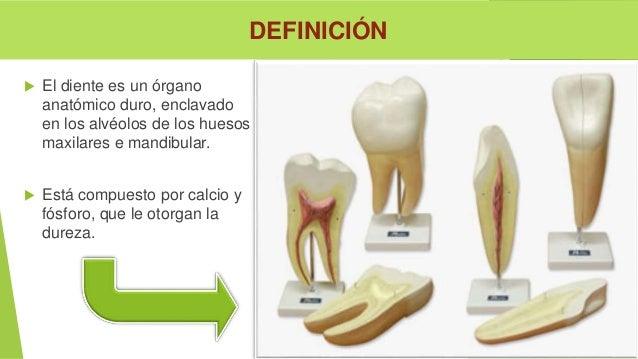 3 anatomia y fisiologia del diente