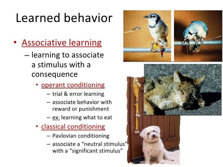 innate and learned behaviors Find innate and learned behaviors lesson plans and teaching resources quickly find that inspire student learning.