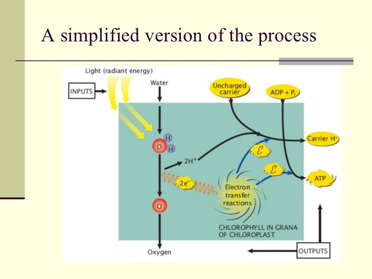 The bio chemical processes in nature